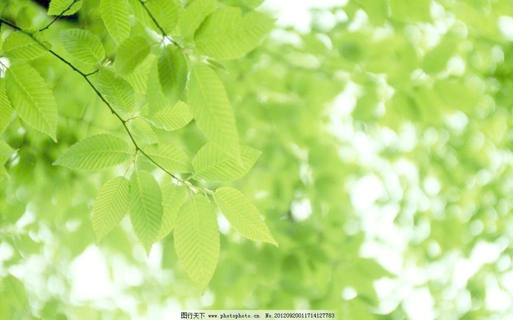 绿色树叶 绿叶 清新 绿色树叶图片素材下载 绿色树叶 树叶 绿叶 椭圆