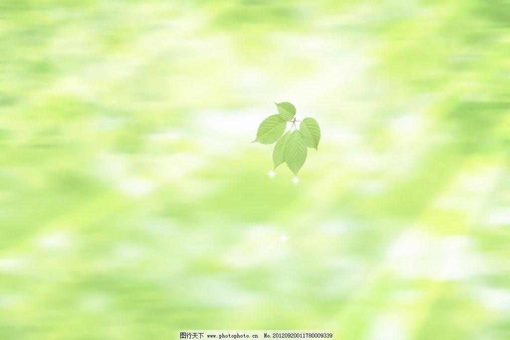 绿色树叶 绿背景图片