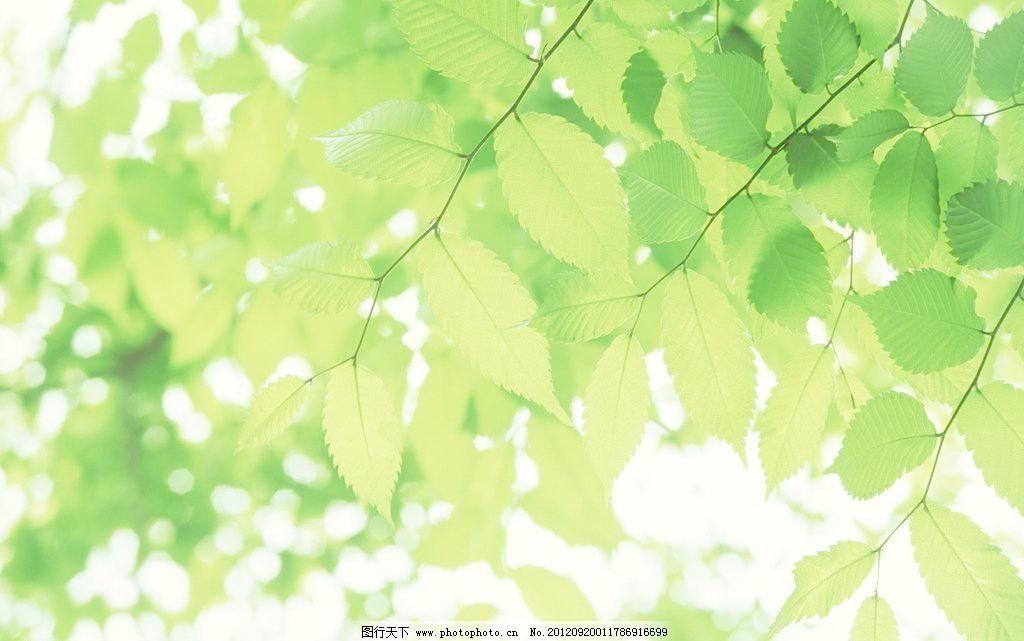 350DPI JPG 春天 春天素材 大自然 风景画 建筑园林 绿色 绿色树叶 绿叶 绿色树叶图片素材下载 绿色树叶 树叶 绿叶 椭圆形叶子 树枝 叶脉 绿色 春天 清新 树叶背景 大自然 春天素材 自然风景 风景画 自然力量 其他 建筑园林 摄影 350dpi jpg 家居装饰素材 山水风景画