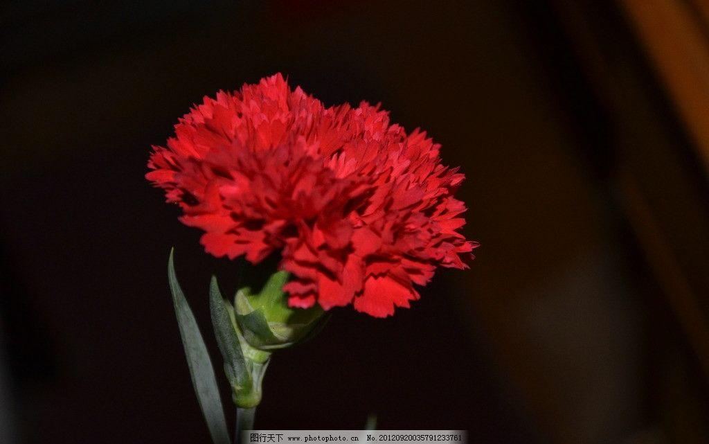 科技小制作花卉