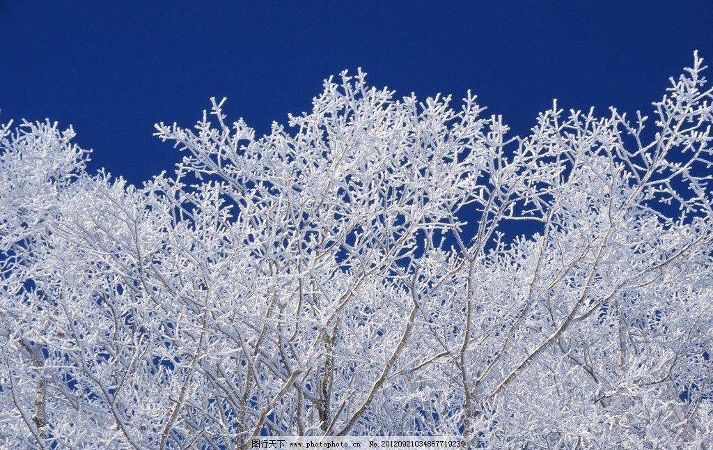 冬天的树 冬天 大树 白雪 自然风景 自然景观 摄影 350dpi jpg