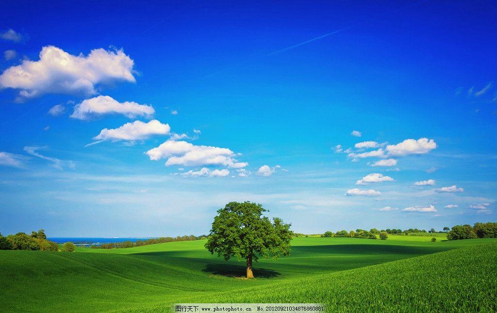 草地绿树 蓝天 白云 草地 绿树 自然风景 自然景观 摄影 72dpi jpg