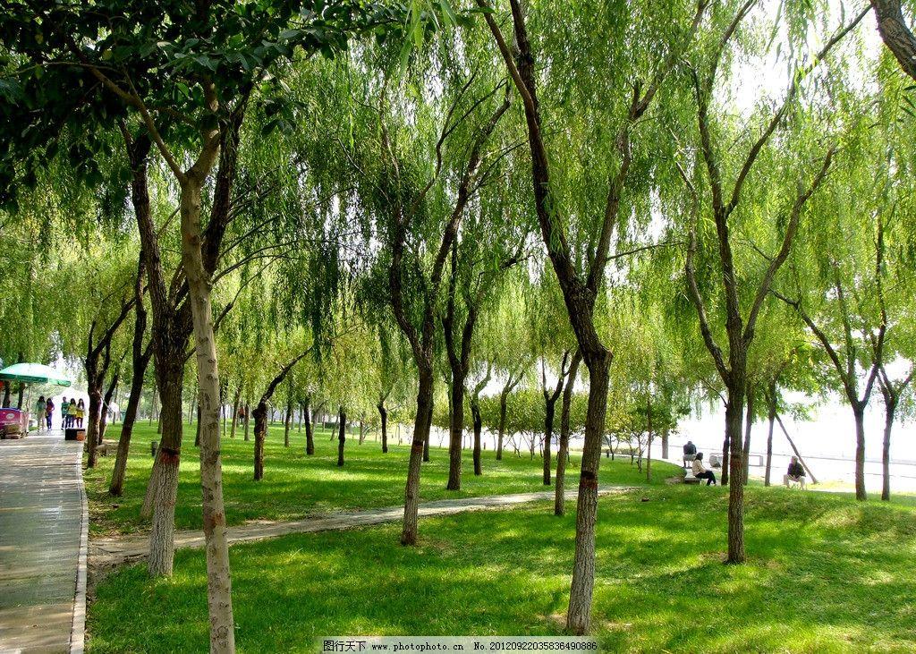 树林绿地图片_树木树叶_生物世界_图行天下图库