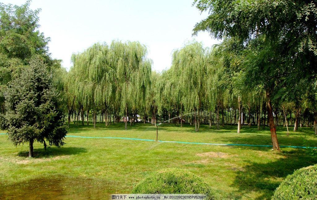 草坪树林 草地 柳树 松树 树荫 公园景色 喷灌 园林景观 园林建筑