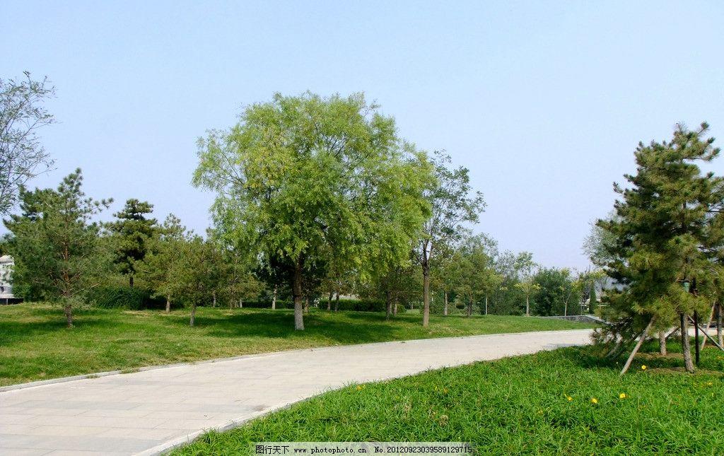 公园景色 树丛 小道 草坪 草地 绿地 蓝天 园林景观 园林建筑 建筑
