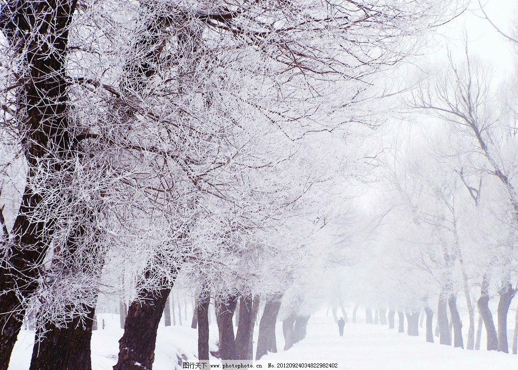 雪域红柳 雪景 雾凇 路 雪地 大树 摄影