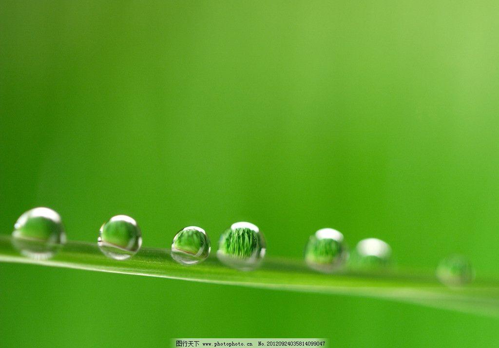 水滴 绿色 透明水珠