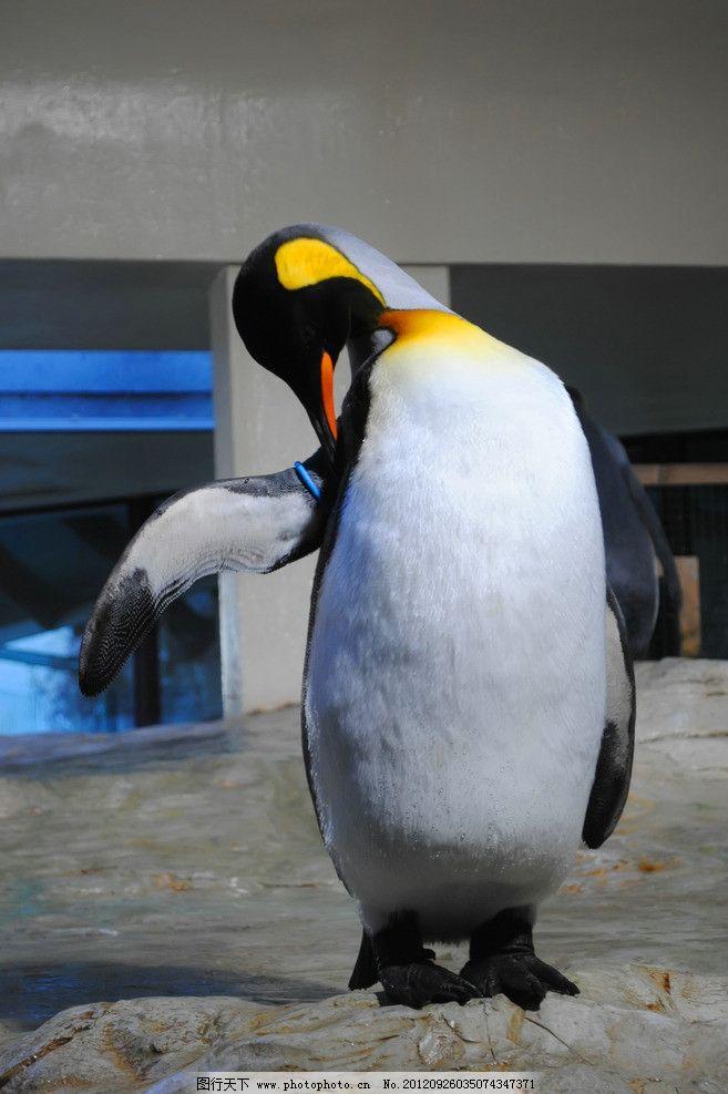 企鹅 动物摄影 南极企鹅 帝企鹅 企鹅素材 野生动物 生物世界 摄影 30