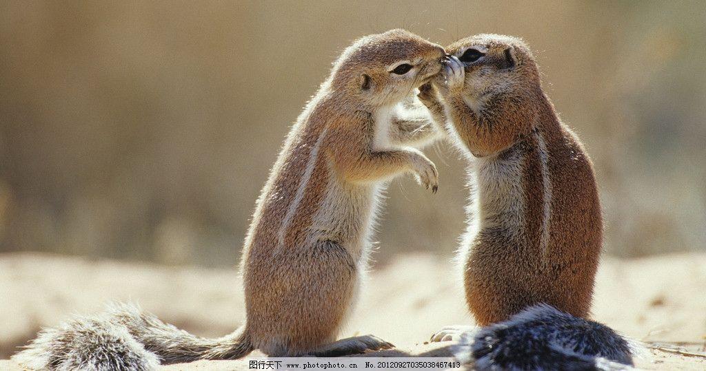 松鼠 动物 野生 爬树 可爱 毛皮 小动物 野生动物世界 摄影