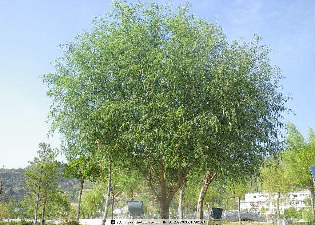 一棵树的囹�a_一棵树图片